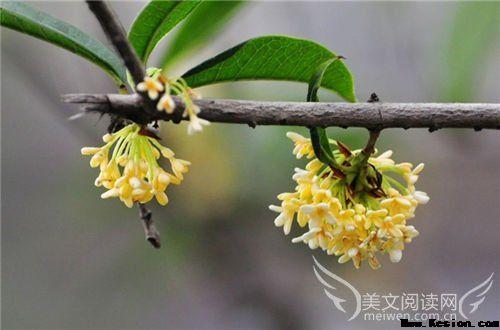 再回眸,是否春风依旧笑靥如花