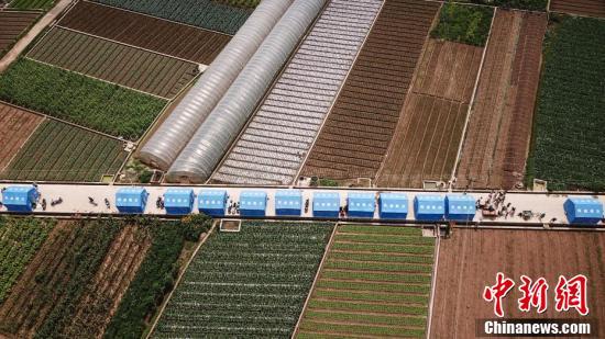 云南通海发生5.0级地震 民众在蔬菜田间避震
