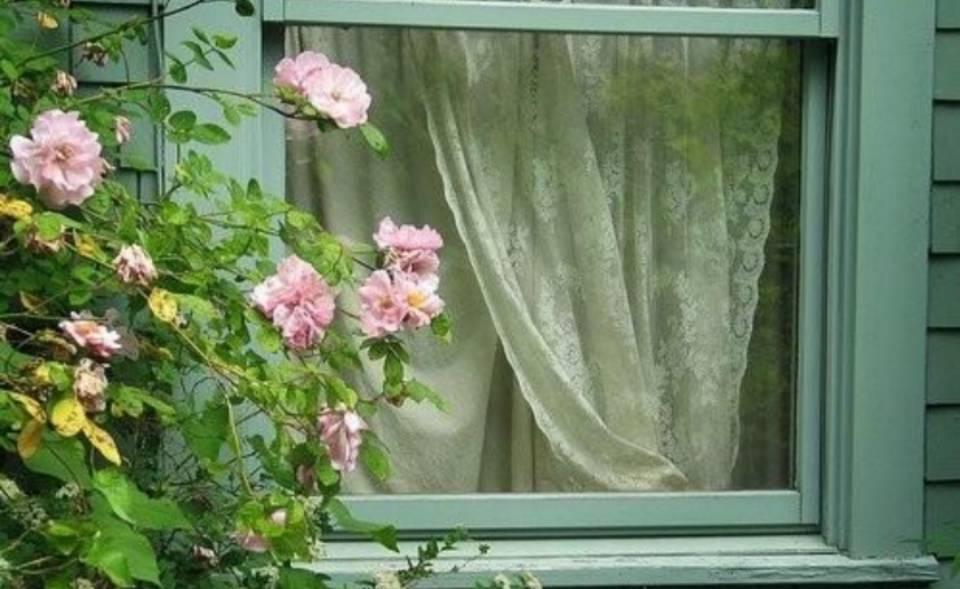 李旸:心田上的百合花
