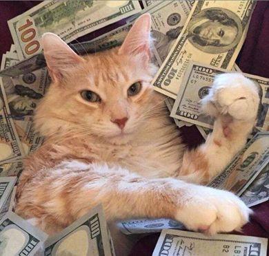 炒到千元一只的猫爪杯,网友怎么看?