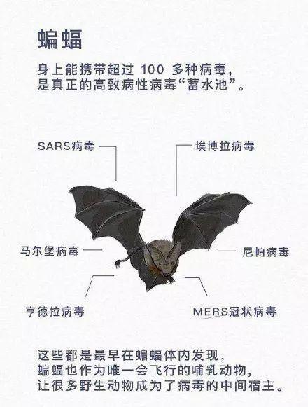 """被众网友指责""""美女吃蝙蝠""""的汪梦云,如今公开道歉,但于事无补"""