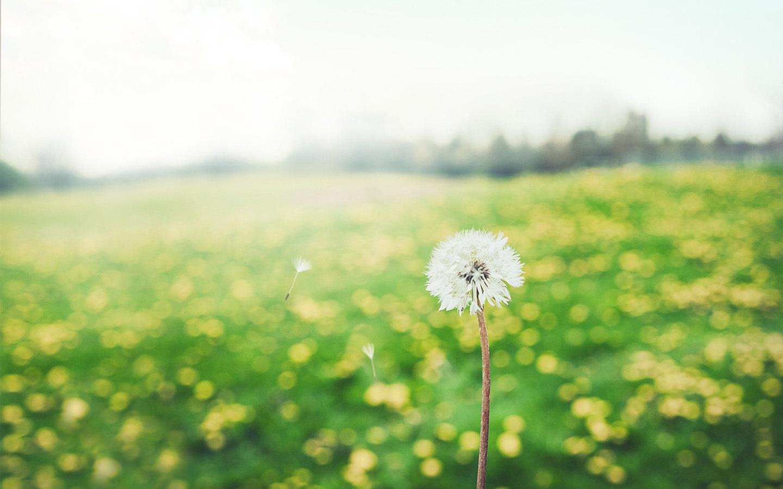 若水忆风:远方甚好,我们一同前行......