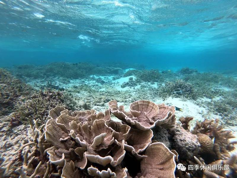 《海底》:仿佛进入了深沉大海